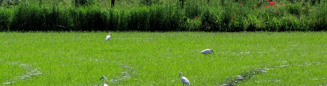 Ecosistemi e biodiversità