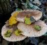 Due corsi per la raccolta funghi