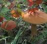A Magenta e Pavia corsi per la raccolta funghi