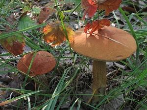 Funghi & Zucche