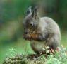 Rossoscoiattolo: percorsi educativi per le scuole