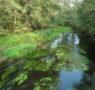 Linee guida parere compatibilità aree protette e siti natura 2000