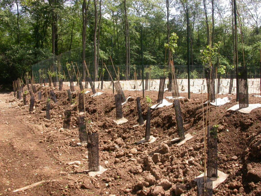 Riqualificazione forestale