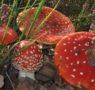 Corso raccolta funghi