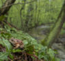 Dal Pelobate fosco al Tritone, l'erpetofauna del Parco del Ticino: riconoscimento e monitoraggio