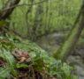 Visite guidate alla scoperta del pelobate fosco nelle Paludi di Arsago