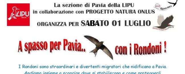 A spasso per Pavia …con i rondoni!