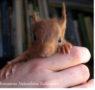 Alla scoperta di mr Red lo scoiattolo rosso