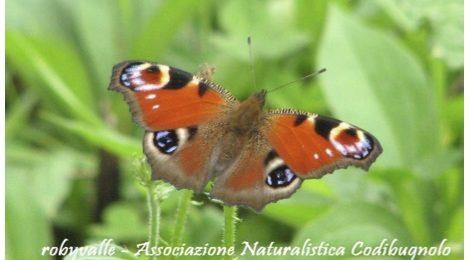 Butterflywatching, al via il corso a Vigevano