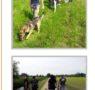 Nel Parco del Ticino con gli amici a 4 zampe