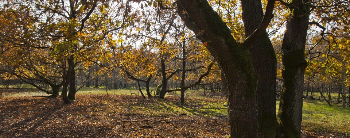 Riferimenti e Norme in materia di paesaggio