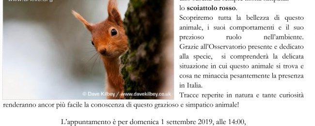 Alla scoperta di mister red, lo scoiattolo rosso