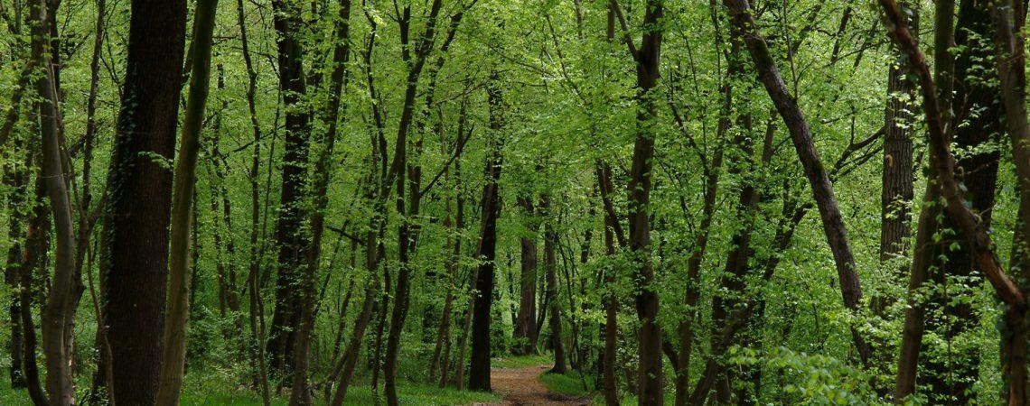 Progetto Life boschi Piarda di Bernate