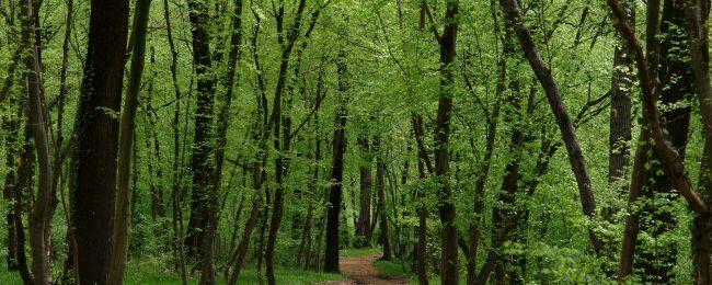 Yoga al bosco