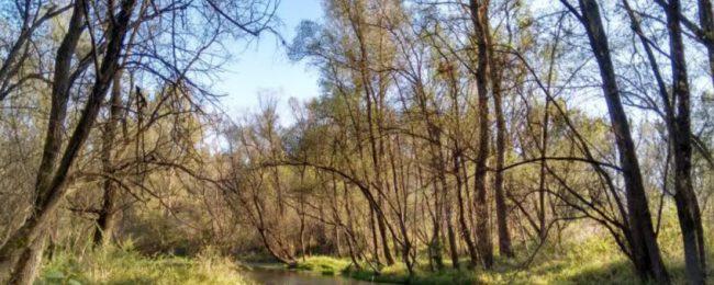 Il bosco dei segreti