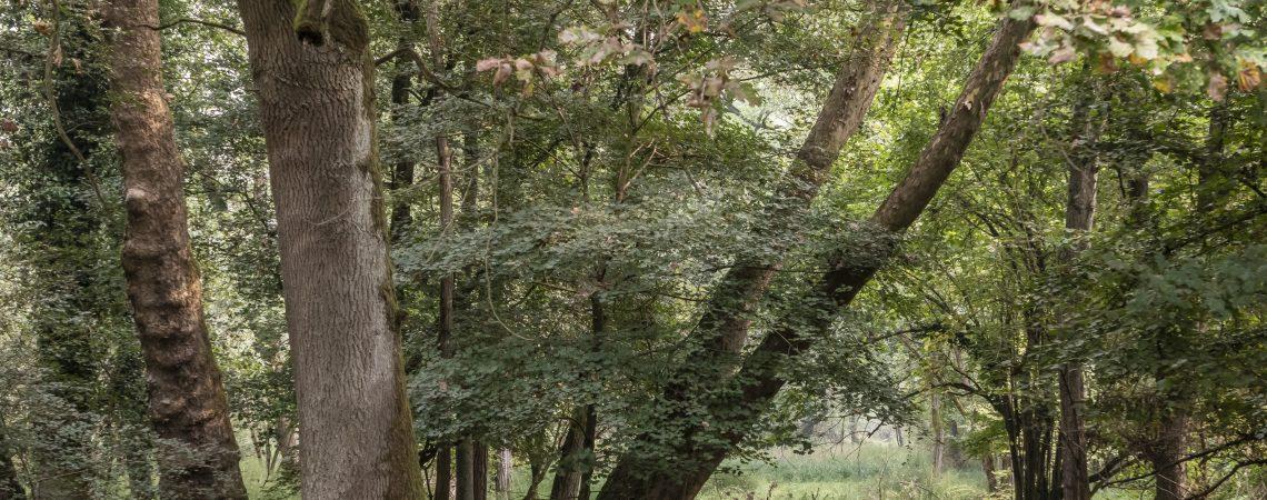 Stagione 'Silvana': in calo le richieste di taglio boschi