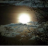 Battiti d'ali nella notte di luna piena