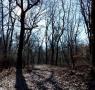 Istanze taglio boschi e piante: si ricevono su  appuntamento