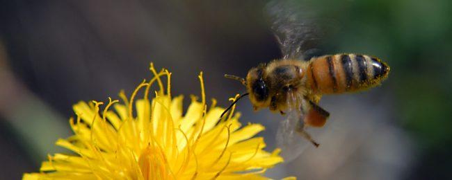 Biodiversità: ricchezza di vita dal fiume al bosco, dai prati alle…api